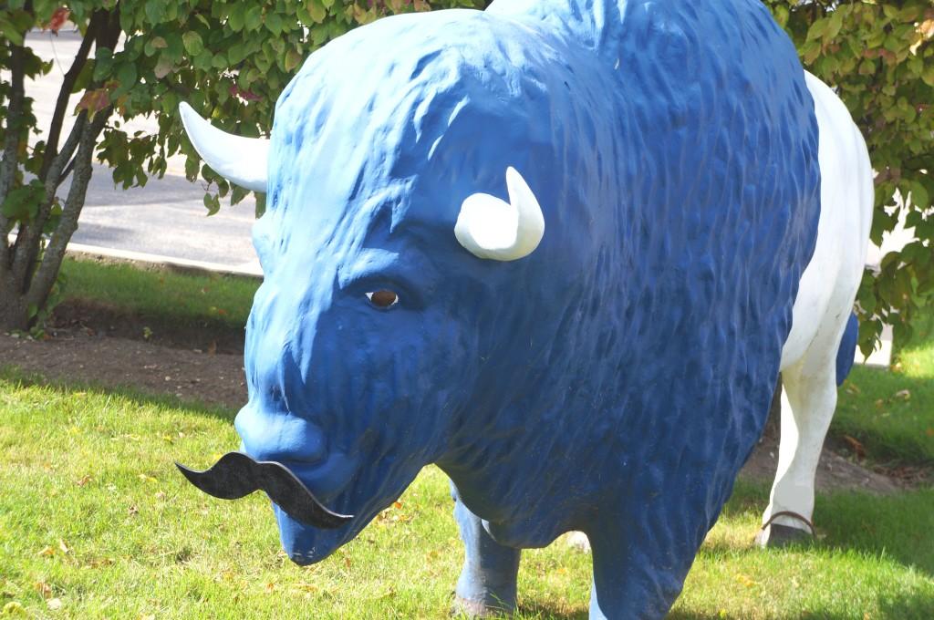 Movember Full Buffalo